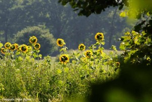 The Green Circle - Workshops in de Natuur - terrein zonnebloem doorkijk