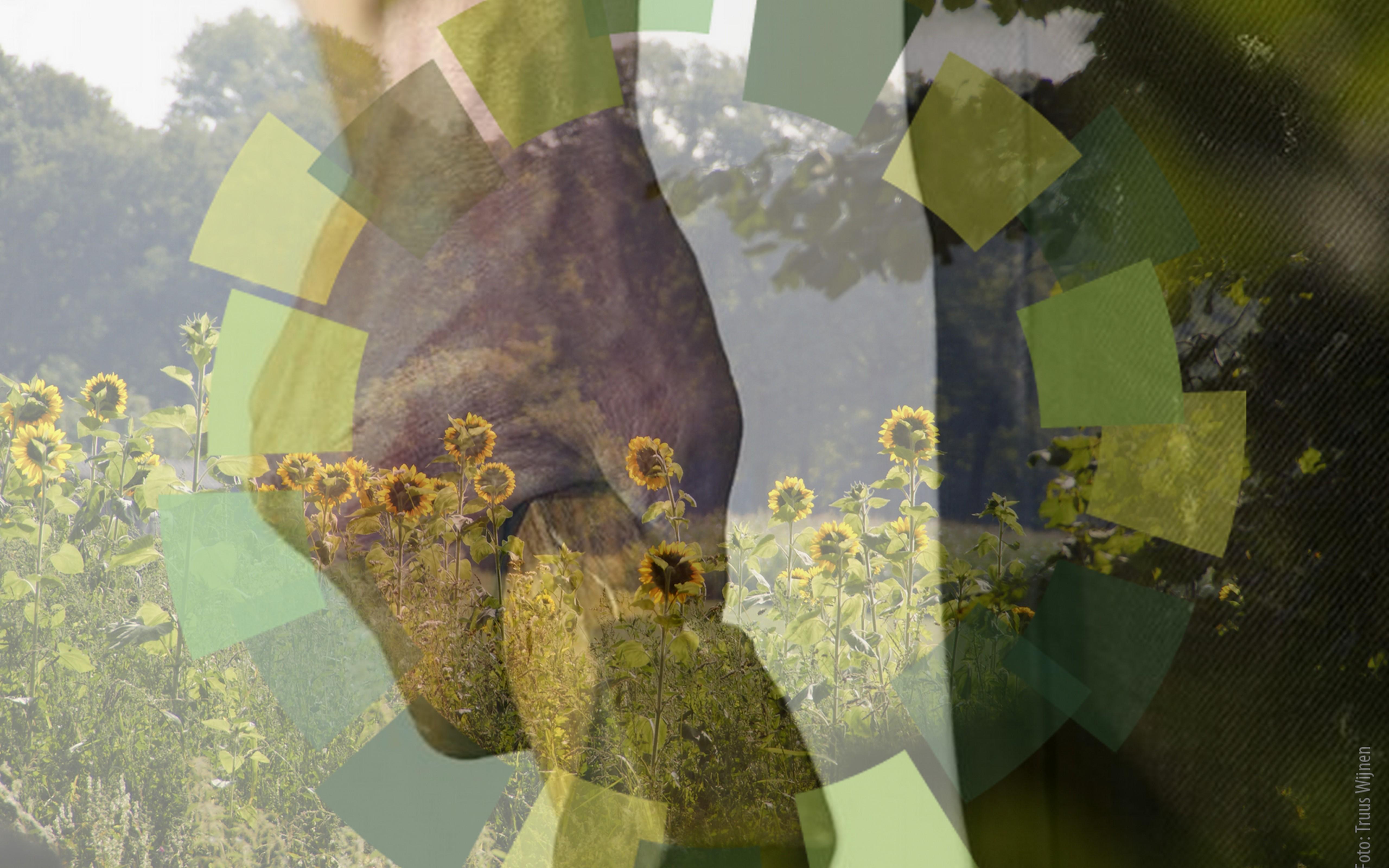 The green circle logo zonnebloemen en bijl workshops in de natuur - Steen ijzer smeden ...